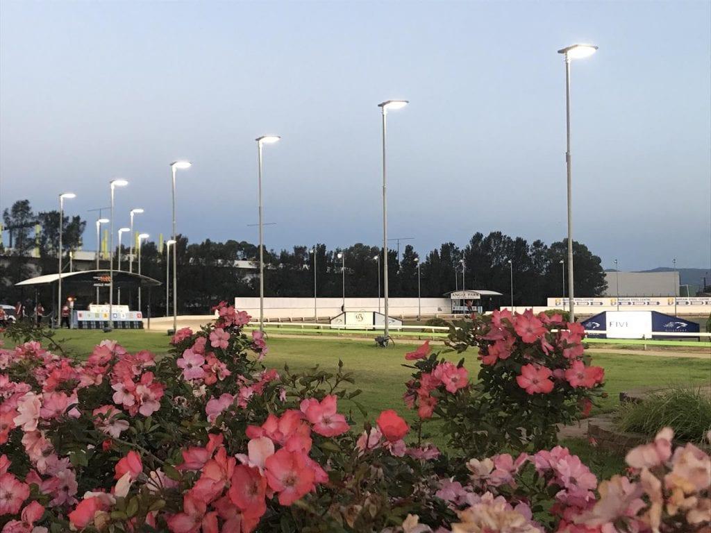 Angle Park Greyhound Track